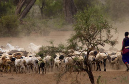 "Policy Baseline for ""Reducing the Vulnerability of Pastoral Communities"""
