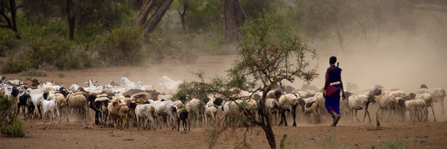"""Policy Baseline for """"Reducing the Vulnerability of Pastoral Communities"""""""
